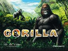 Игра на деньги Gorilla в онлайне